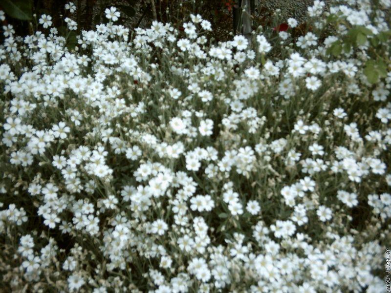 Le jardin de jean marie et ses astuces plantes tox blogs for Entretien plantes vivaces