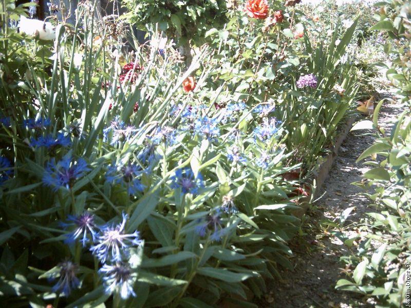 Le jardin de Jean Marie et ses Astuces,plantes tox [blogs.fr Le blog ...