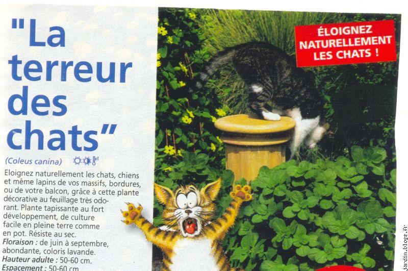 Le jardin de jean marie et ses astuces plantes tox blogs for Anti chats jardin