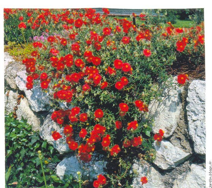 Le jardin de jean marie et ses astuces plantes tox blogs for Modele de rocaille pour jardin