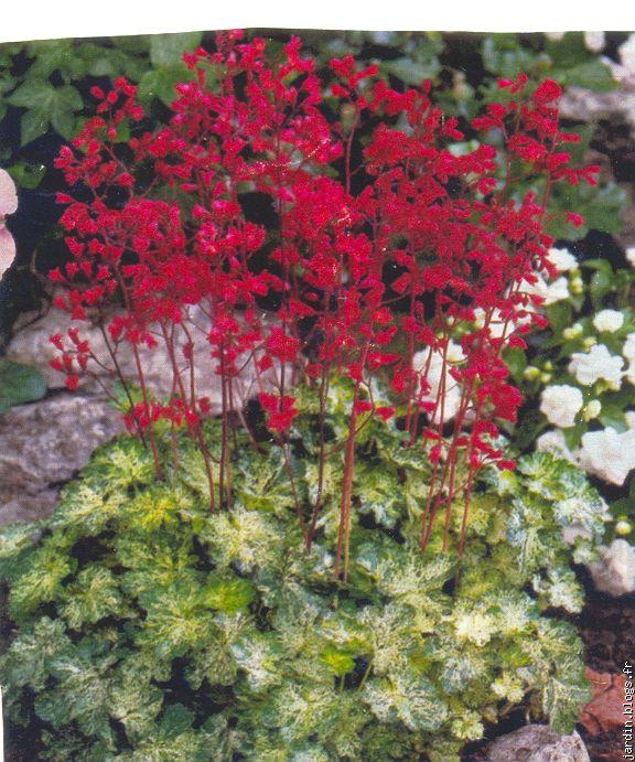 le jardin de jean marie et ses astuces plantes tox blogs. Black Bedroom Furniture Sets. Home Design Ideas