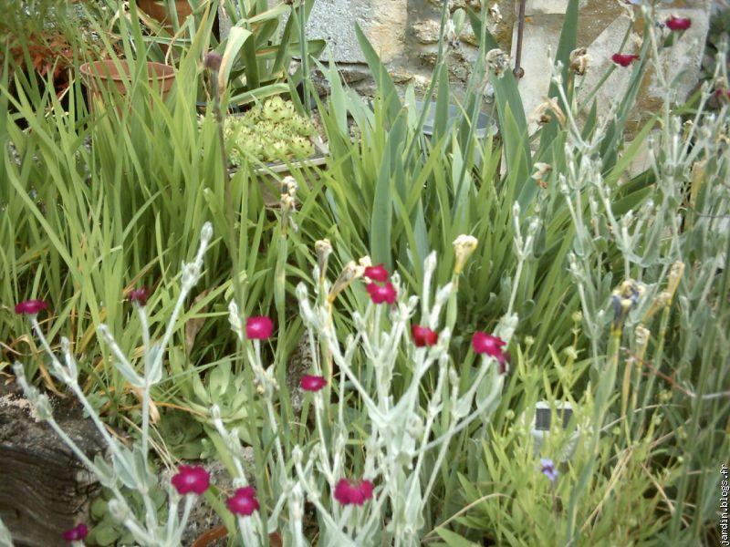 Le jardin de jean marie et ses astuces plantes tox blogs for Les plantes vivaces