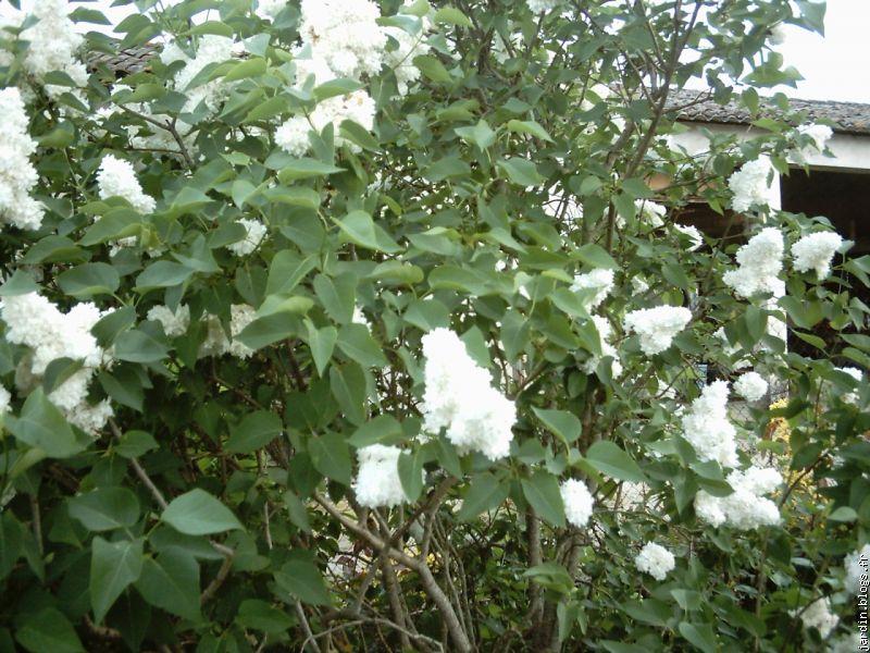 le jardin de jean marie et ses astuces plantes tox le blog multim dia 100 facile et. Black Bedroom Furniture Sets. Home Design Ideas